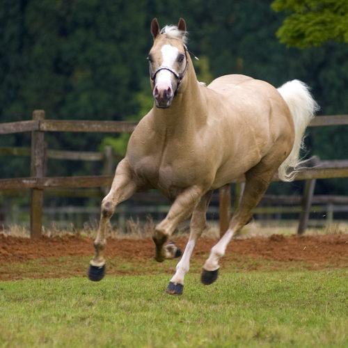 w-Pferde3