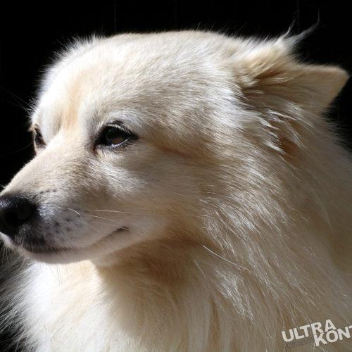 w-dog-1387171