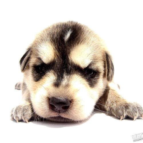 w-dog-1392233