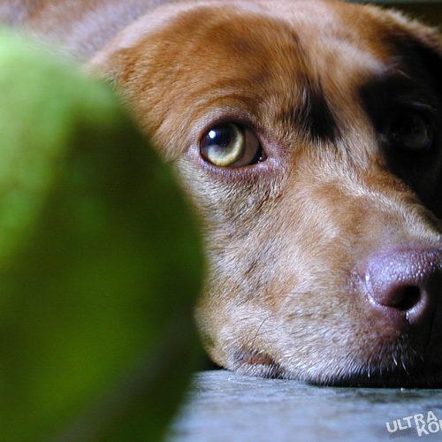 w-dogs-1393611